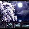 Snow__