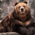 grizzly$